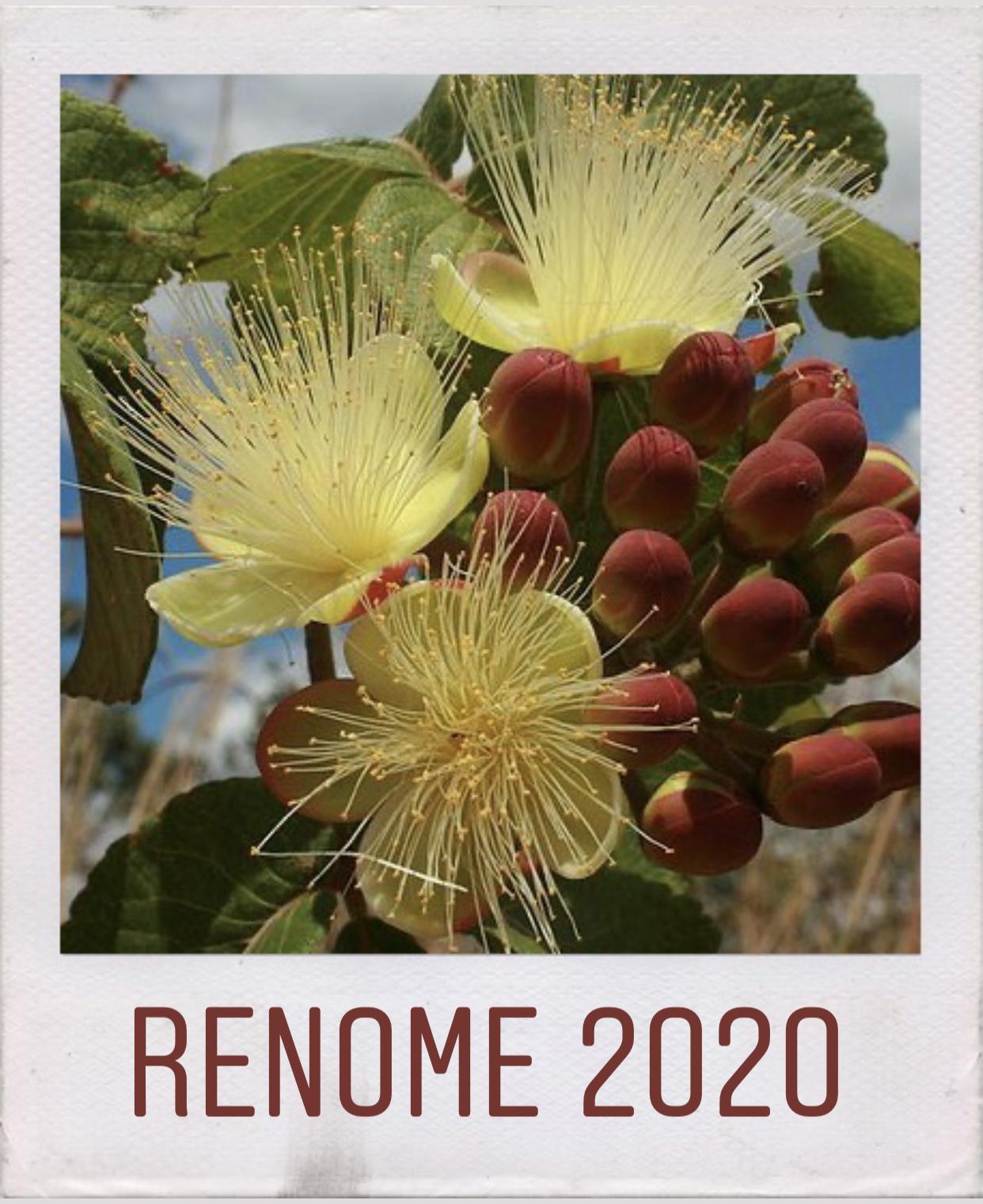 Visualizar v. 9 n. 1 (2020): Renome
